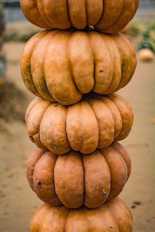 Kostenloses Stock Foto zu ernte, frisches gemüse, halloween-kürbis