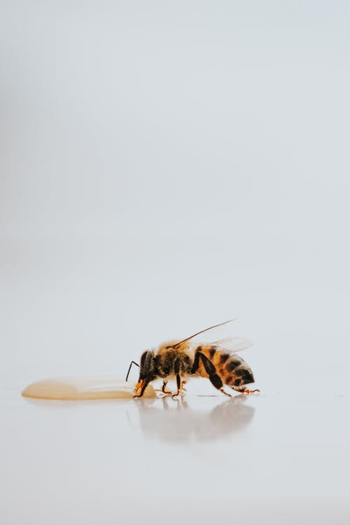 Black And Yellow Bee On White Surface