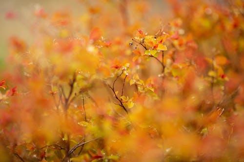 Free stock photo of orange, orange background, orange leaves