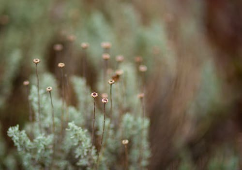 Free stock photo of green, macro flower, macro photo