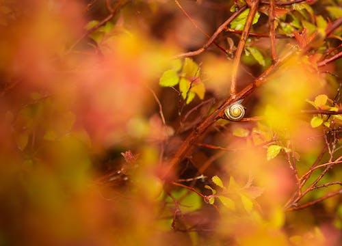 Free stock photo of garden snail, orange, red