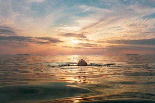 Ingyenes stockfotó alkonyat, hajnal, horizont témában