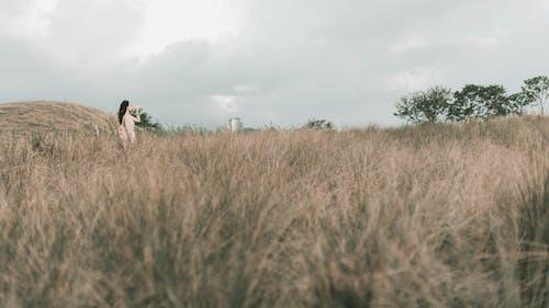 Kostnadsfri bild av fält, film, gräs, natur