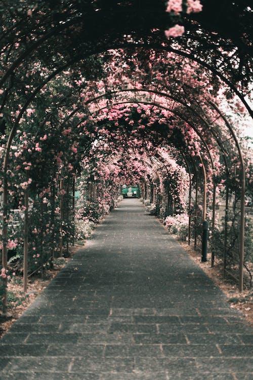 Kostnadsfri bild av båge, blomma, gångväg, grön