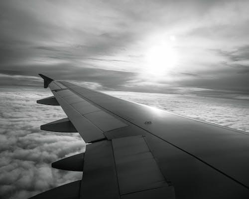 Kostnadsfri bild av bnw, fluga, flyg, flygplan