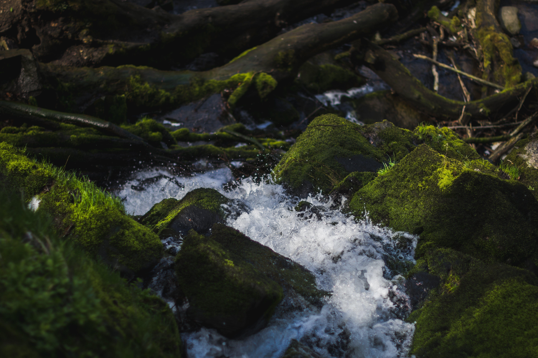 Free stock photo of forest, green stones, nature, splash
