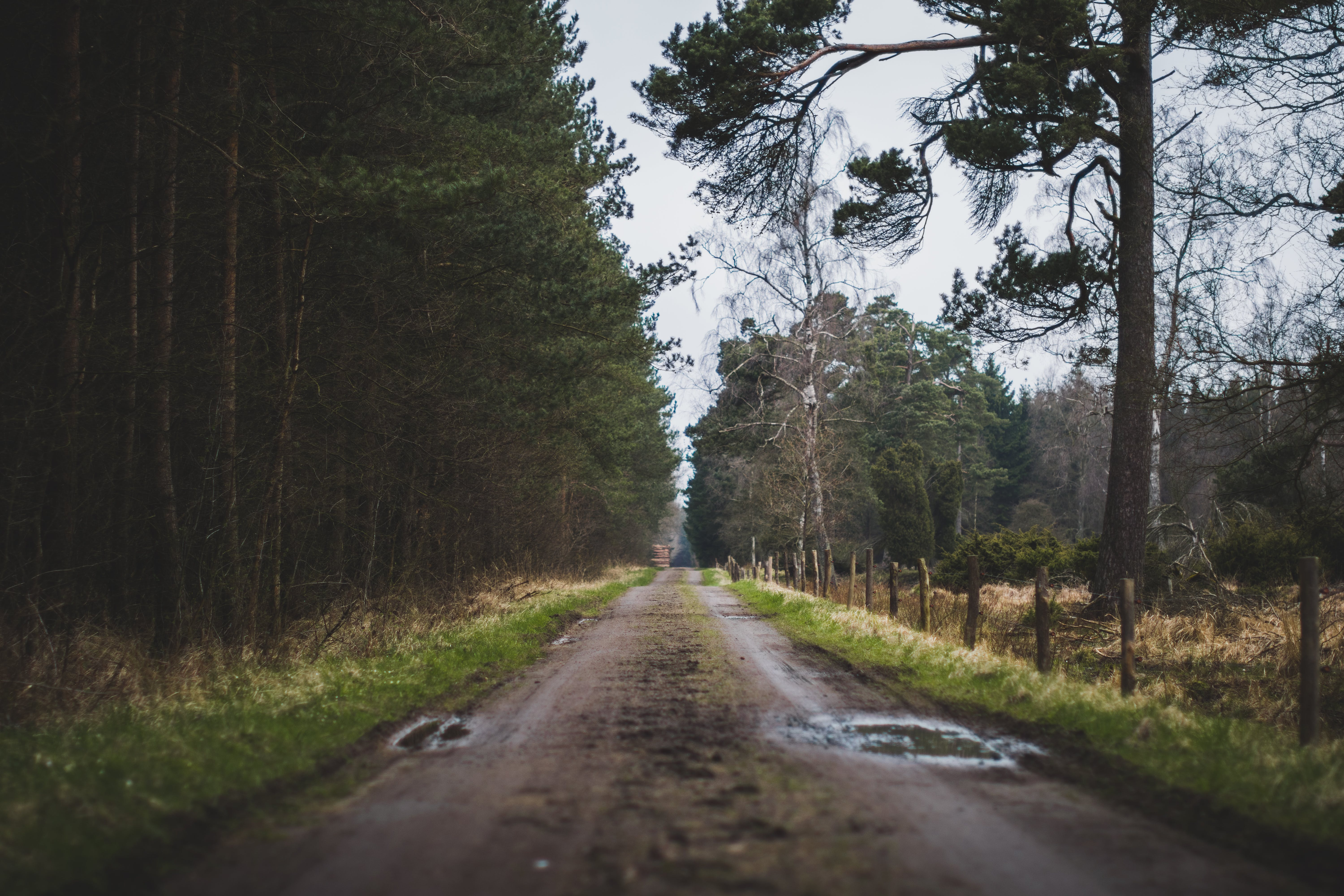 Free stock photo of day, dirt road, fence, forest