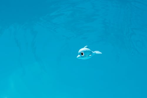 Foto profissional grátis de água, azul, brinquedo