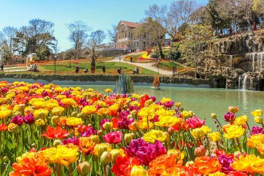 Free stock photo of spring, view, colour, tulip
