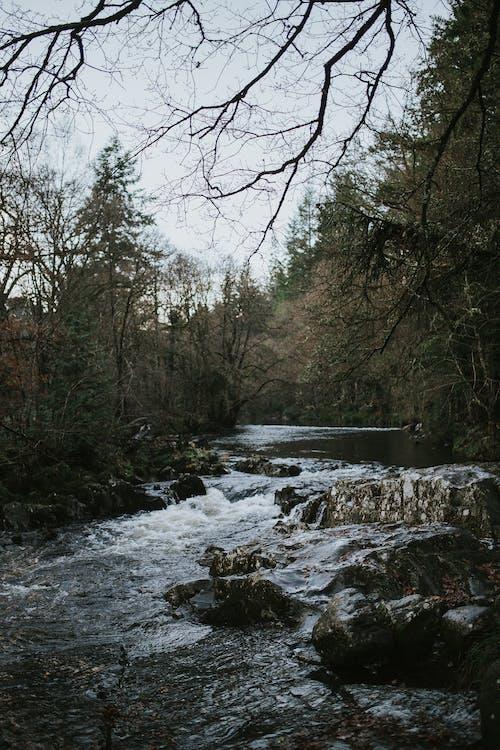 Бесплатное стоковое фото с деревья, окружающая среда, поток, природа