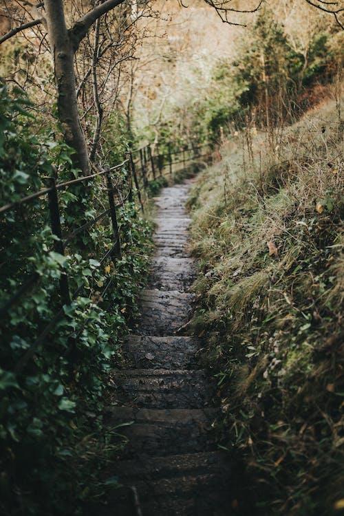 Бесплатное стоковое фото с лестница, ступеньки, тропа, шаги