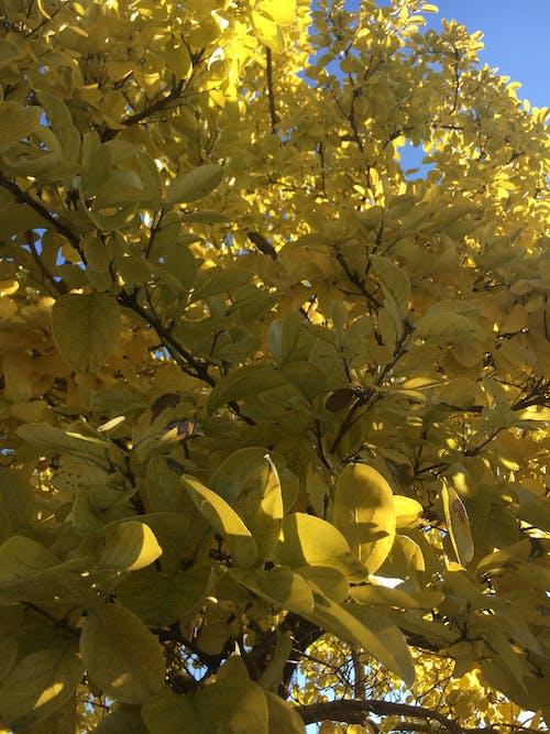 Foto profissional grátis de folhas amarelas, natureza