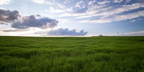 Zielona Trawa Pod Pochmurnym Niebem