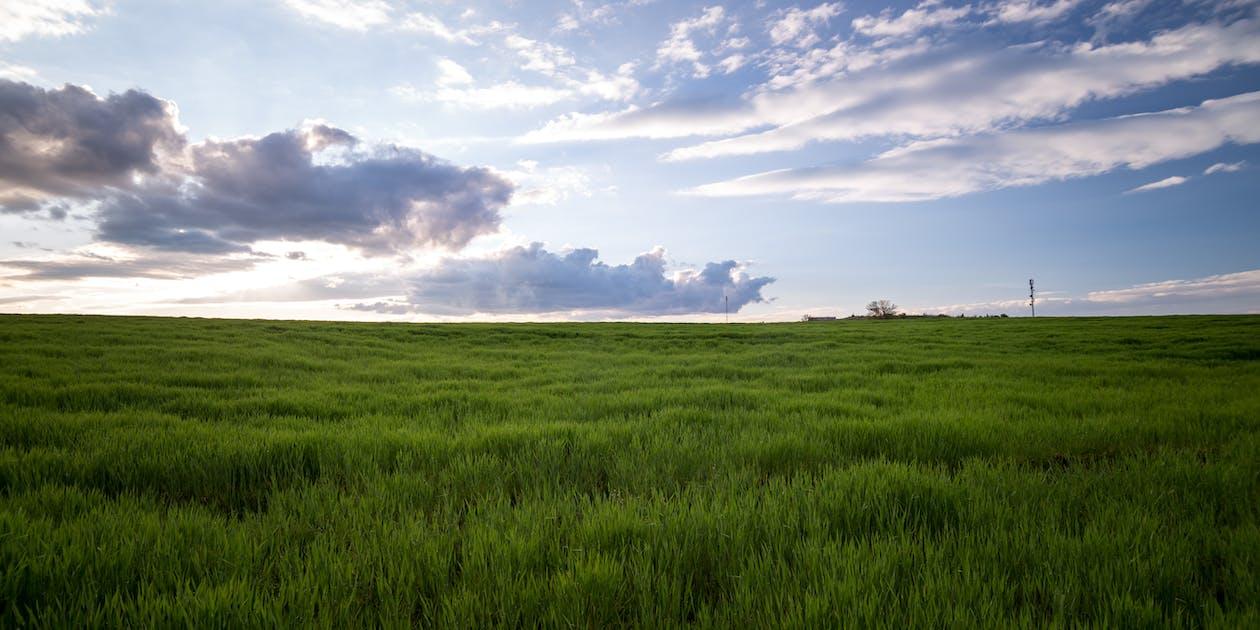 กลางแจ้ง, การเกษตร, การเจริญเติบโต