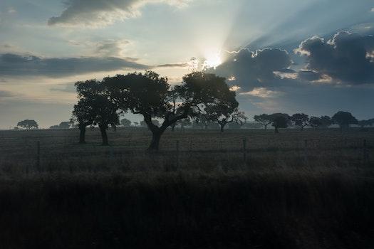 Free stock photo of landscape, tree, morning sun