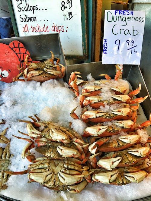 太平洋蟹, 螃蟹, 西雅圖 的 免費圖庫相片
