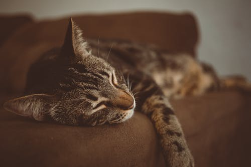 Photo Of Cat Sleeping On The Couch