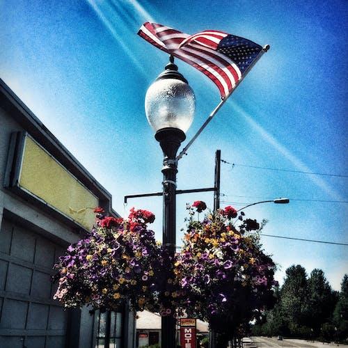 一束花, 美國國旗, 街燈 的 免費圖庫相片