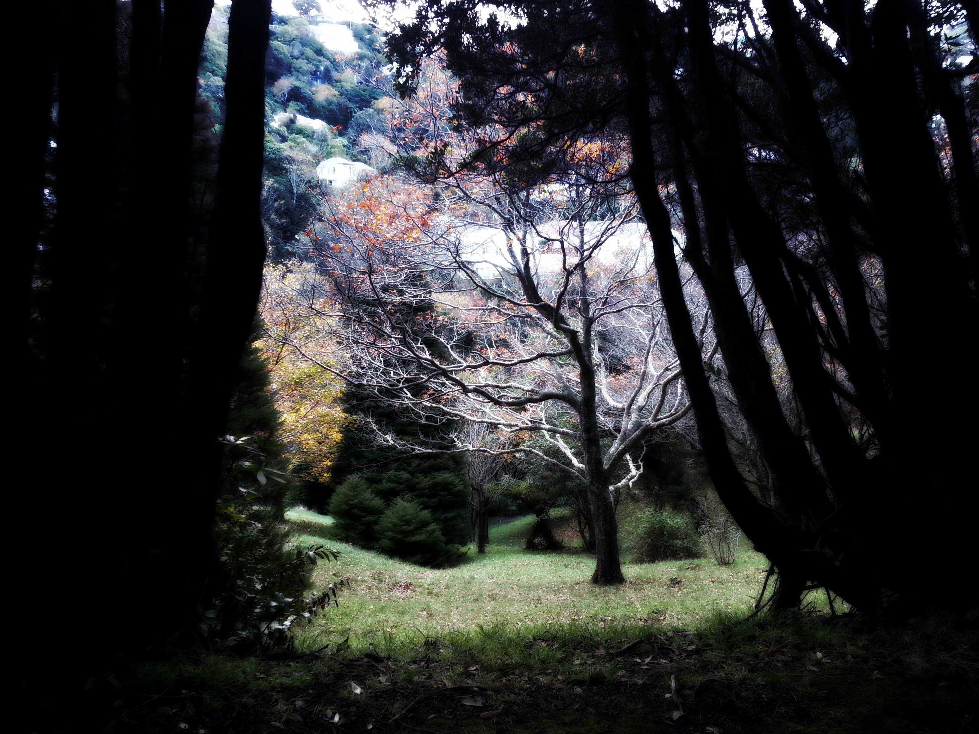 backlit, dark, dawn