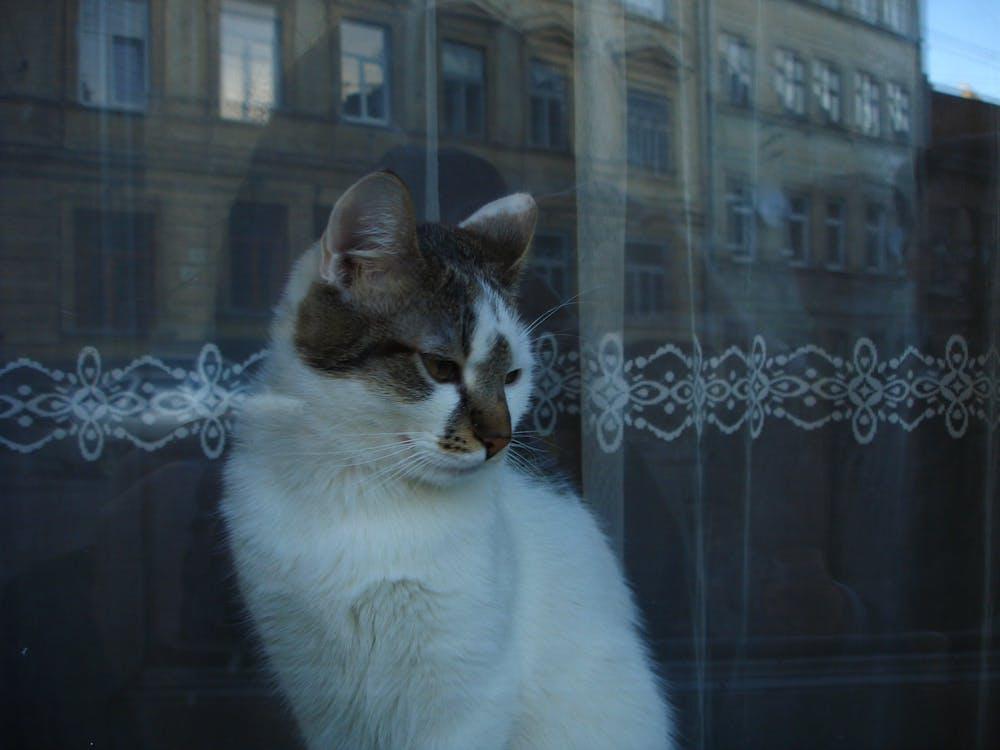 Free stock photo of animal, animal photography, animal portrait