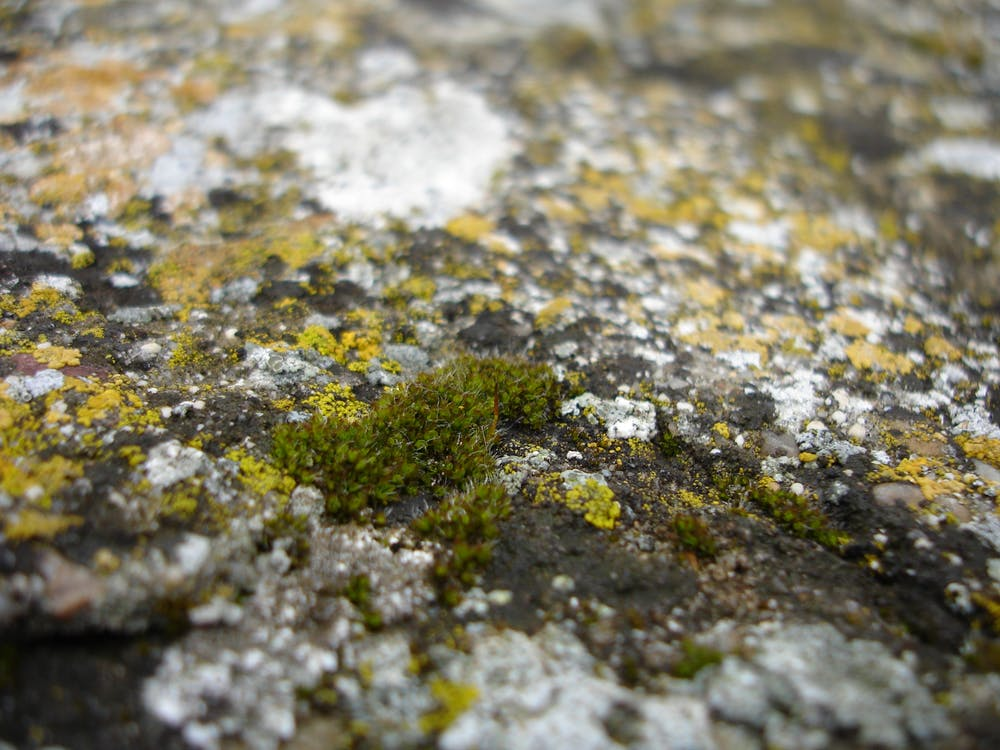 Free stock photo of closeup, green, little things