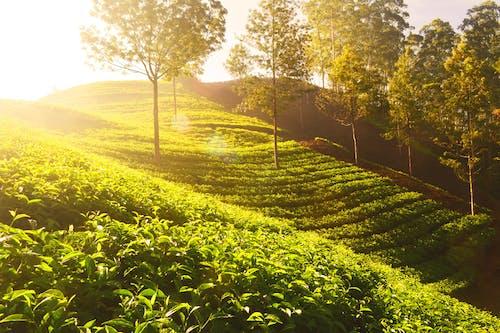 Gratis stockfoto met akkerland, boerderij, bomen, dageraad