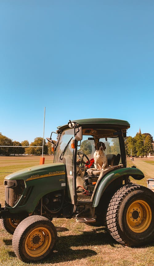 Free stock photo of dog, tractor