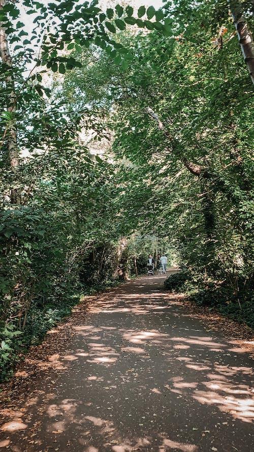 Free stock photo of foliage, footpath, leaves