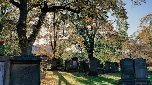 Free stock photo of autumn, cemetery, edinburgh