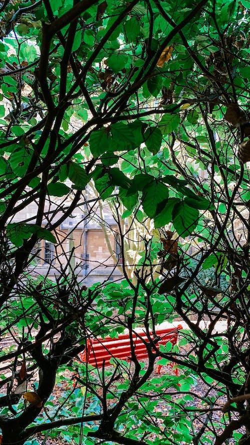 Free stock photo of foliage, greenery, leaves
