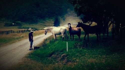 Foto profissional grátis de agricultor, castanho, cavalo, ecológico