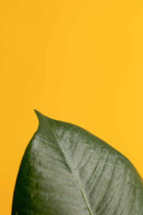 Gratis lagerfoto af blad, ficus, flora, frisk