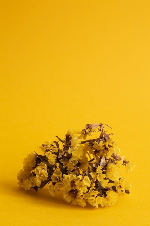 Imagine de stoc gratuită din floră, flori, galben, galbenă
