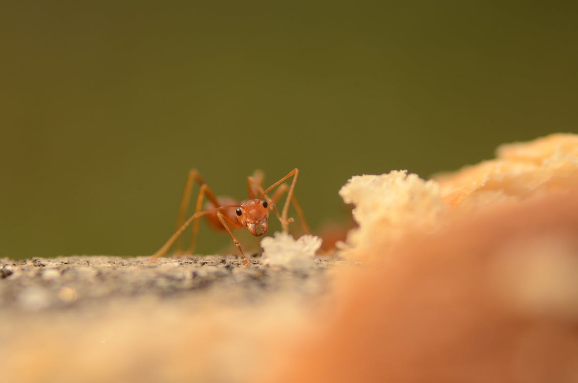 Close-up Shot Of An Ant