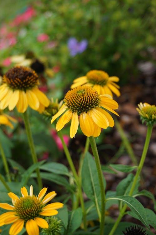 Yellow Flowers In Macro Photography