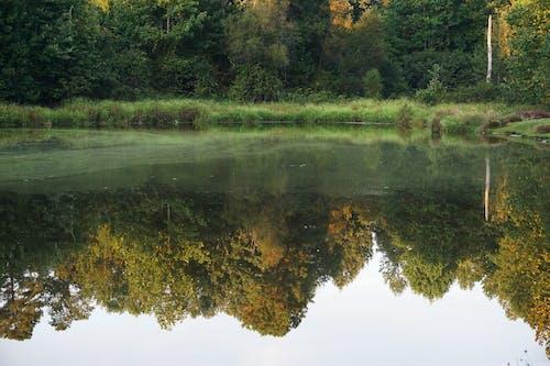 Free stock photo of pond, reflection