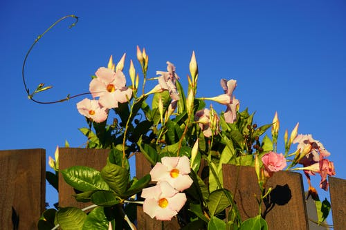 Free stock photo of blue sky, flower, hibiscus