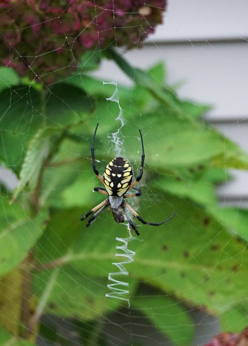 Free stock photo of spider, web, writing spider