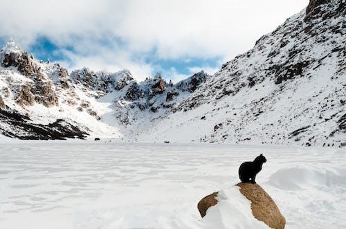 Foto stok gratis alam, Argentina, binatang, dingin