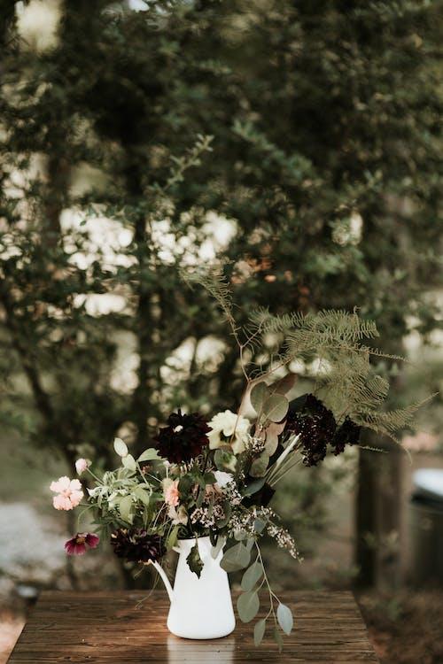Бесплатное стоковое фото с флора, цвести, цветение, цветочная ваза