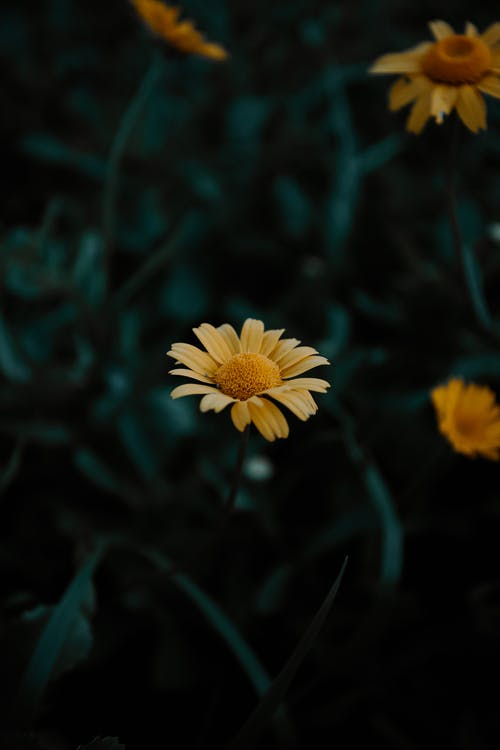 Yellow Flower In Macro Photography