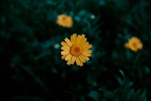 Kostnadsfri bild av bakgrundsbilder mac, blomma, blomma tapeter, flora