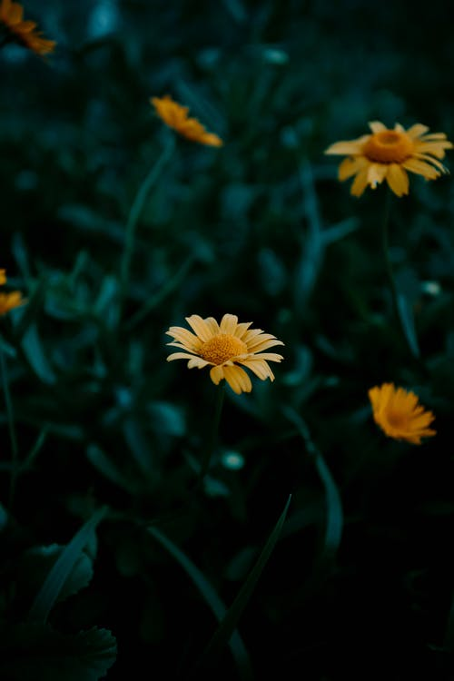 Ảnh lưu trữ miễn phí về cánh đồng, cánh hoa, cây bụi