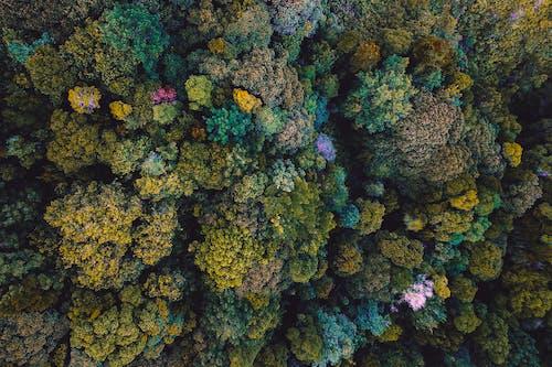 Imagine de stoc gratuită din aerian, arbori, codru, copaci