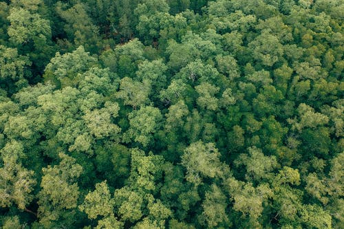 Aerial Shot Of Green Trees