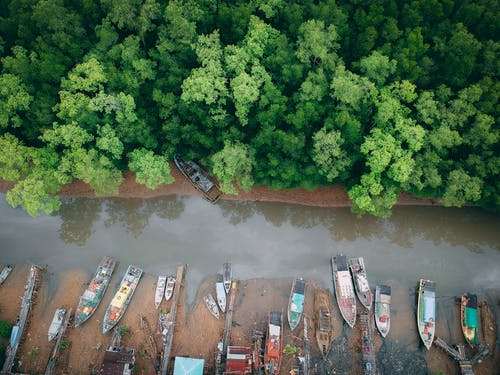 Aerial Shot Of Forest Near Body Of Water