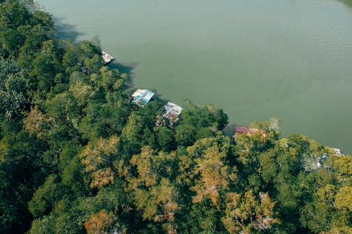 Aerial Shot Of Forest By The Water