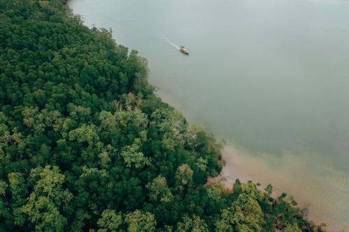 Fotos de stock gratuitas de aéreo, arboles, barca