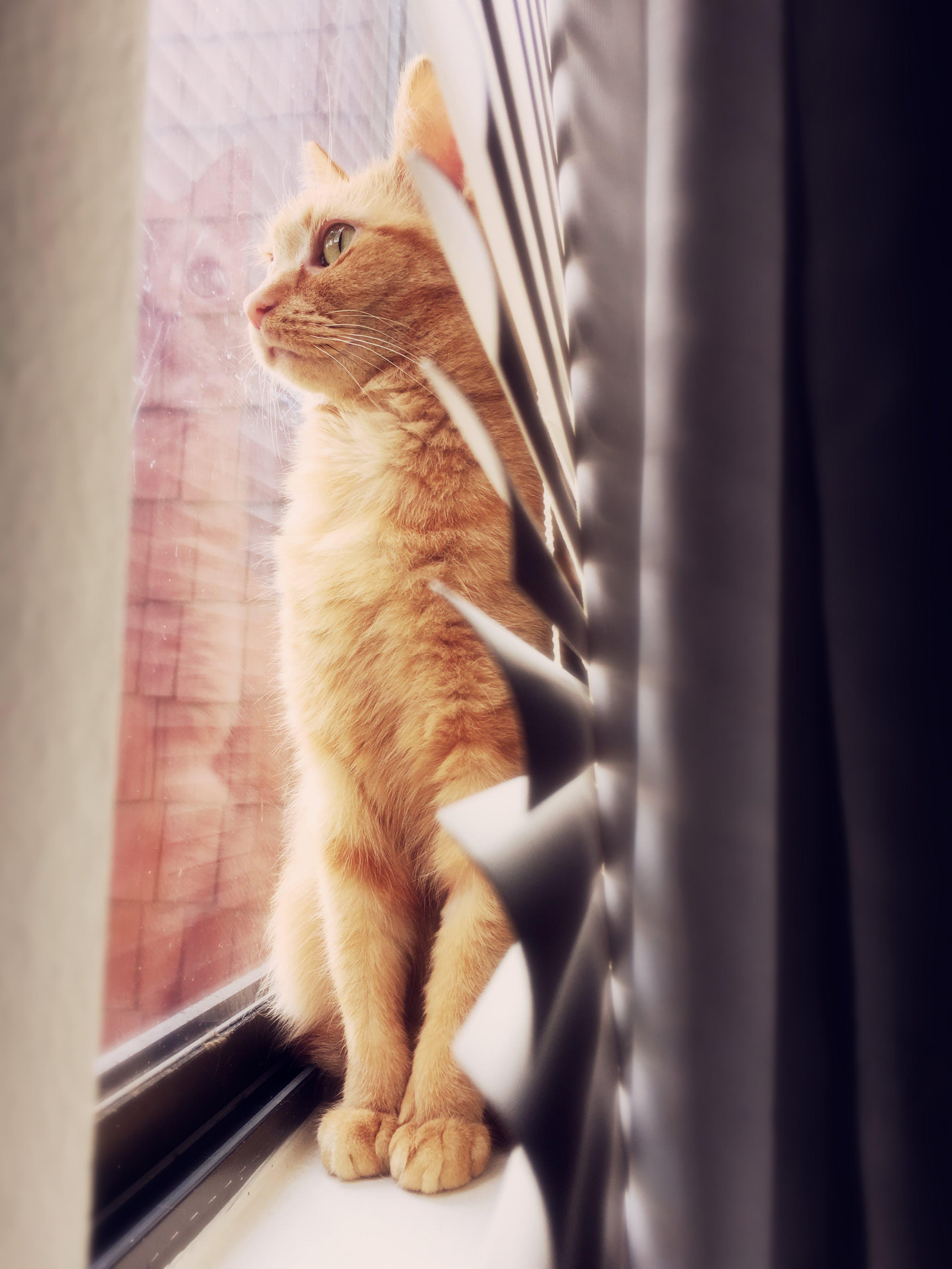 Free stock photo of cat, eye glasses, glass window, sad eyes