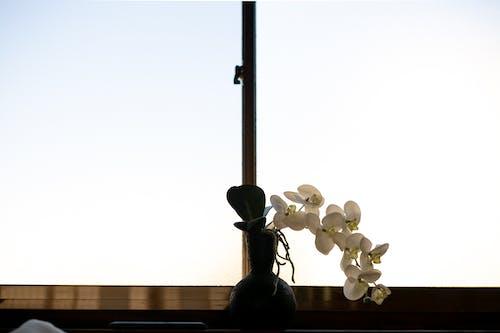 Free stock photo of beautiful flowers, japan, japanese